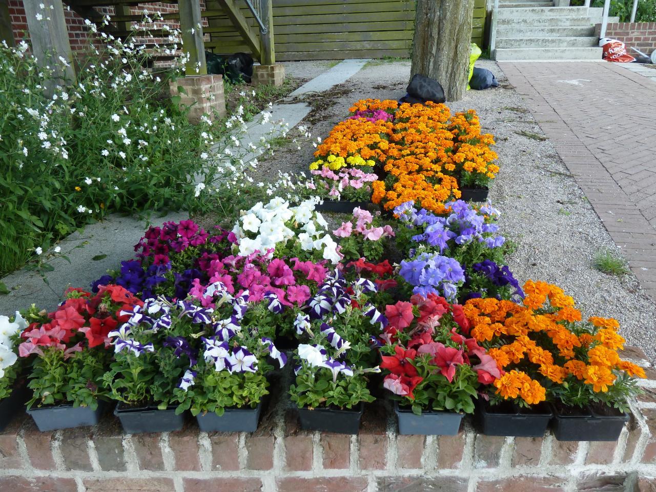 Le pépiniériste Jardins en Campagne offre ses fleurs